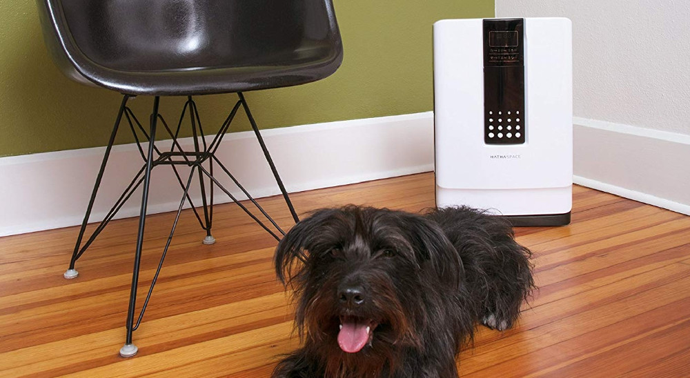 Best Air Purifiers for Pet Dander