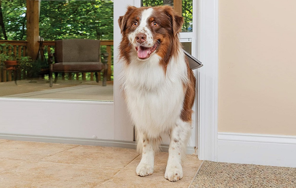 Smart Dog Doors